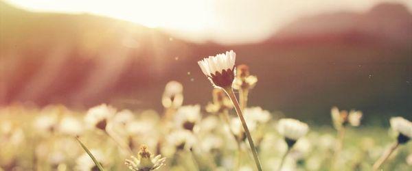 Gesundheit und Schönheit, die Heilmittel des Frühlings