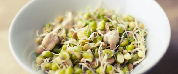 Mung beans and their sprouts