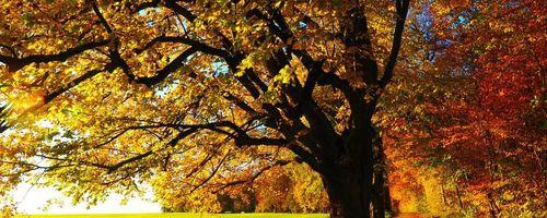 Wald, mehr als ein Anti-Stress, ein echtes Stimulans für das Immunsystem
