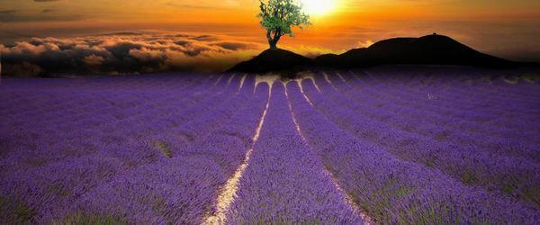 Lavender hydrolat