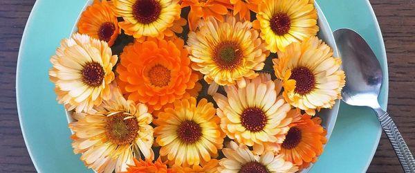 Blumen zu essen, wie man Farben, Düfte und Gesundheit servieren kann Teil 2, Ringelblume und Stiefmütterchen