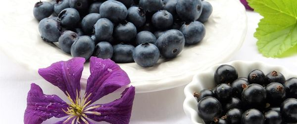 Blackcurrant seed oil, an exceptional oil for the beauty of the skin