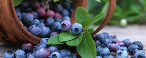 Heidelbeere (Frucht)