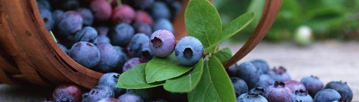 Mirtillo nero (frutti)