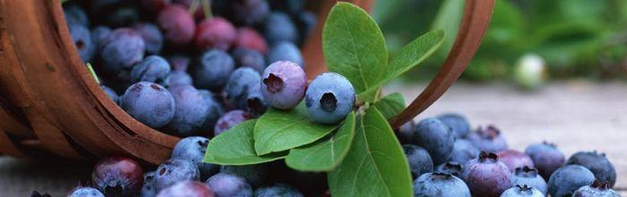 Bilberry (fruit)