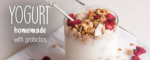 Homemade yogurt with probiotics