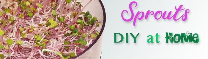 DIY sprouts, how to grow them at home and their properties